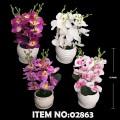 BONSAI FLOWER PLANT 02863