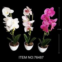 BONSAI PLANT PHALAENOPSIS 76487